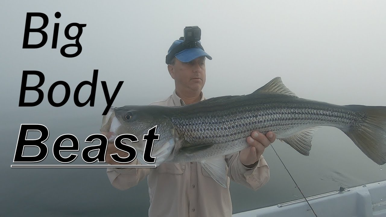 More Stripers on the Swing and How to Make Catfish Sandwiches