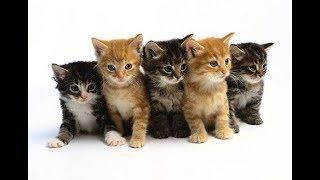 Funny Cats Video.Cats Funne 2017🐈.দুষ্টু বিরাল