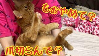 爪切りが嫌で必死に逃げる猫がかわいい!