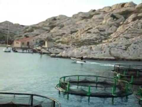 French Sea bass/sea bream farming
