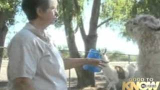 abc special arizona llamas