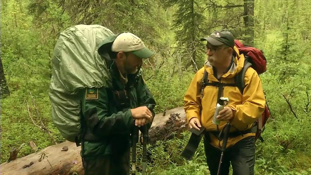 Studies Show Bear Spray More Effective Than Guns Against ...