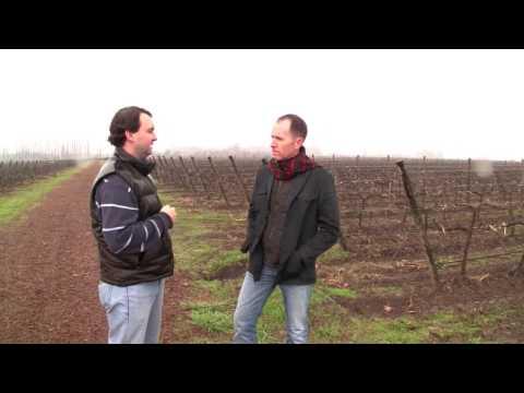 Matt Cain, of Yellow + Blue Wines, in the DeMartino Organic Sauvignon Blanc vineyard, Chile