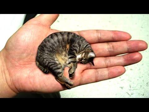 10 Kleinste Tiere Der Welt!