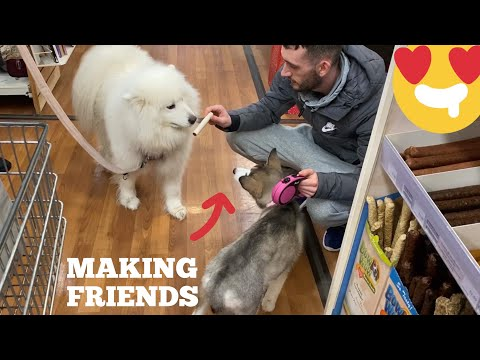 Public Reaction To My New Puppy! [MEETING NEW FRIENDS!]