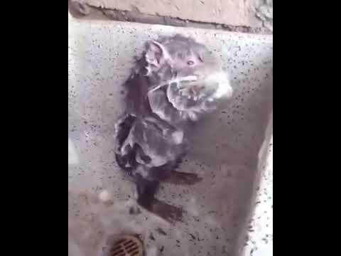 OMG rat sing assurance by Davido