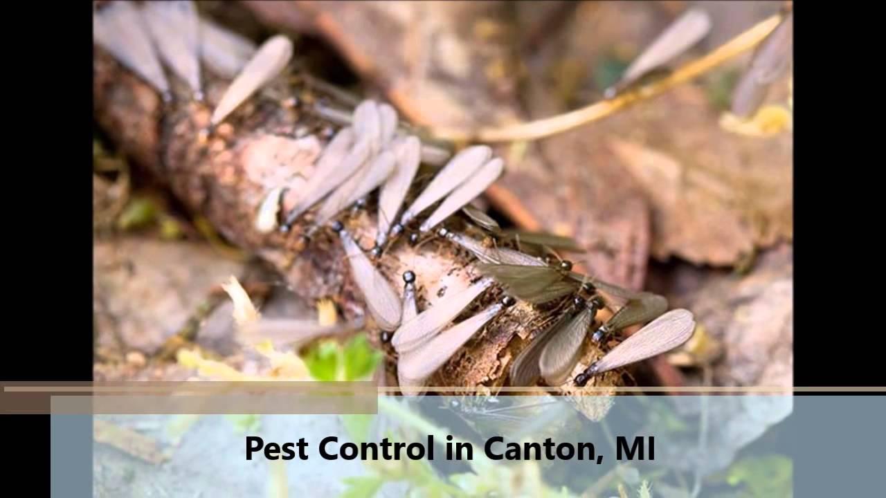 Pest Control Canton Mi Security
