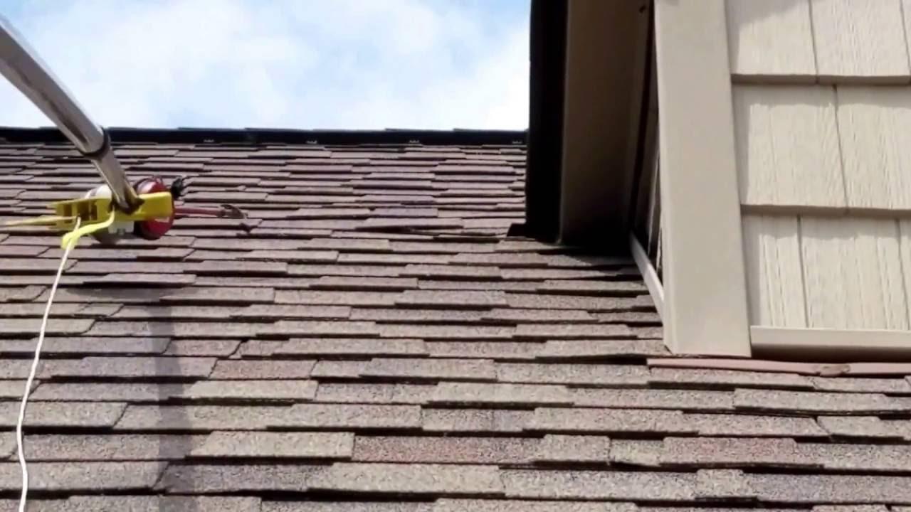 Wasp Nest In Roof Tiles Tile Design Ideas
