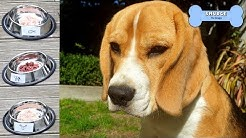 What is Beagle Puppy's Favorite Food?