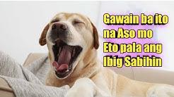 Ganito Ba Lagi Kinikilos ng Aso mo?Alamin ang Ibig Sabihin ng mga ito