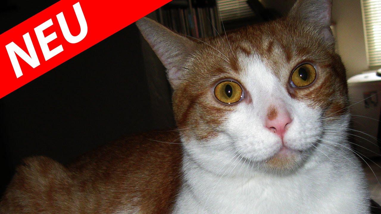 Youtube Katzen Lustig