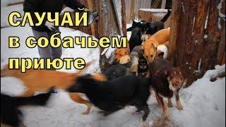 Случай в собачьем приюте Что теперь делать с дикими псами