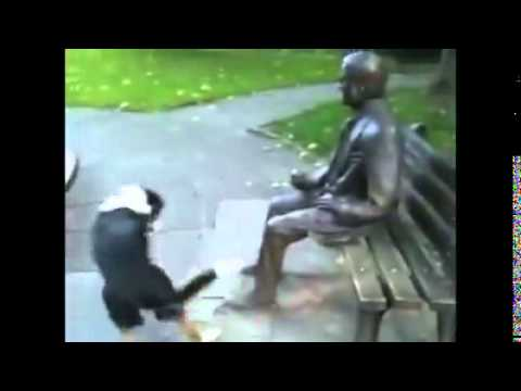 Poor doggie doesn't understand why man sitting on the bench refuses to play with him