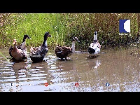 Abdu Rahman's Agro Paradise | HARITHAM SUNDARAM | Kaumudy TV