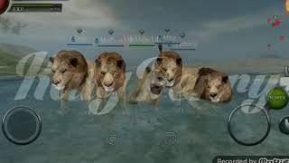 Wild Animals Online  Music Clip