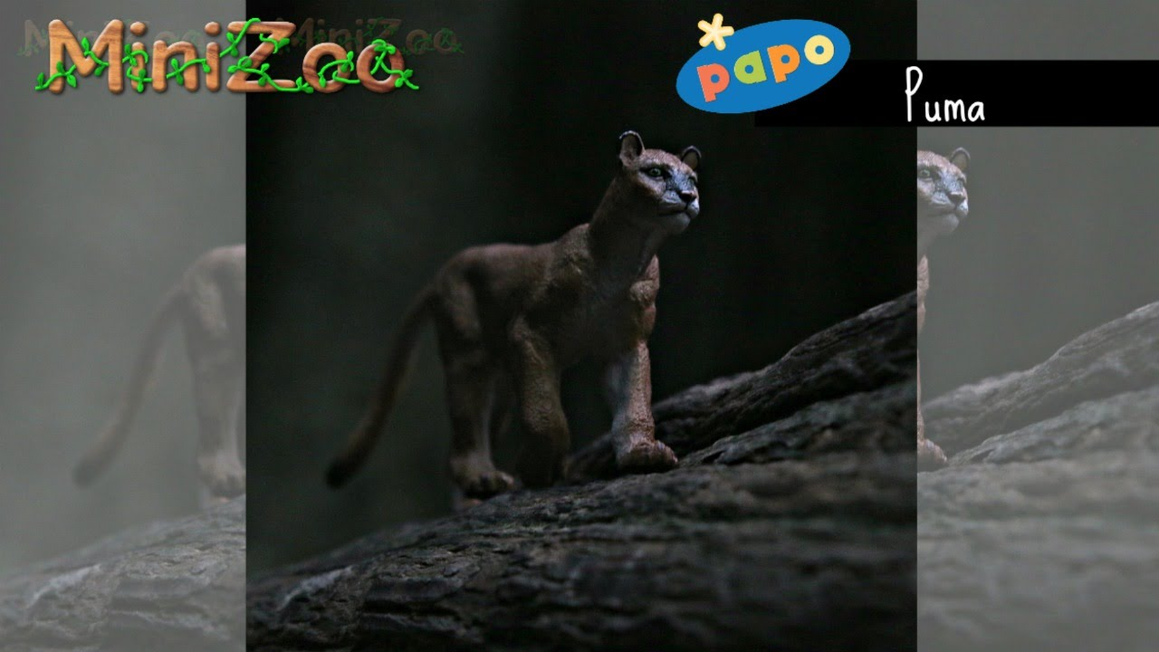 Papo Puma 2016