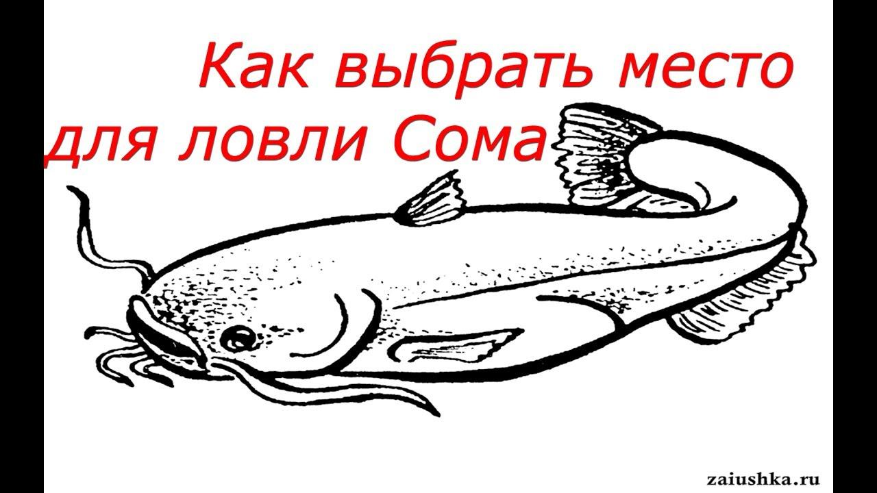 места для рыбалки сом