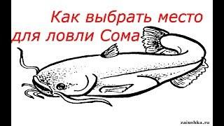 Ловля Сома для начинающих. Как выбрать место для ловли Сома. Catfish.
