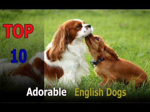 Top 10 animals: Top 10 Adorable English Dogs