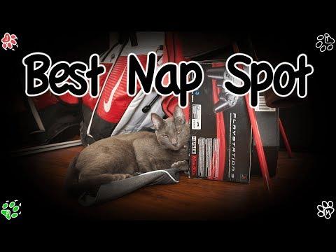 Cat's Best Nap Spot - PONYO & JACKIE know where! (고양이들 낮잠 베스트 장소)