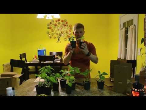 Cross Country Nurseries Unboxing And Review