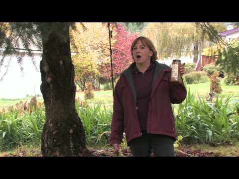 Garden Maintenance How To Repel Squirrels Youtube
