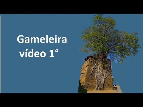 Gameleira 1° vídeo