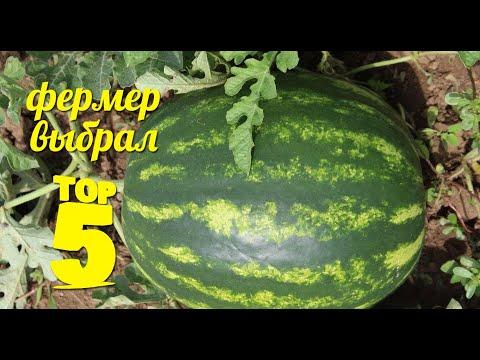 Обзор ТОПОВЫХ АРБУЗОВ - Выбор фермера или какой арбуз посадить!