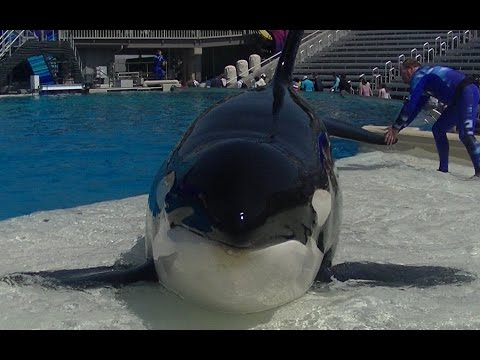 Face to face with Orkid - April 20 2015 - SeaWorld San Diego