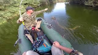 Ловля сома на квок.  За 2 часа 3 до 50 кг.  Šamų žvejyba Su Kvakle. Per 2 Val 3 Iki 50 Kg.