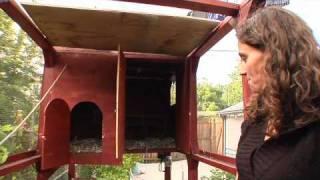 Backyard Chickens Vancouver