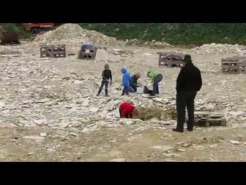 fossilien-suchen-im-besuchersteinbruch-mühlheim---mit-fundgarantie