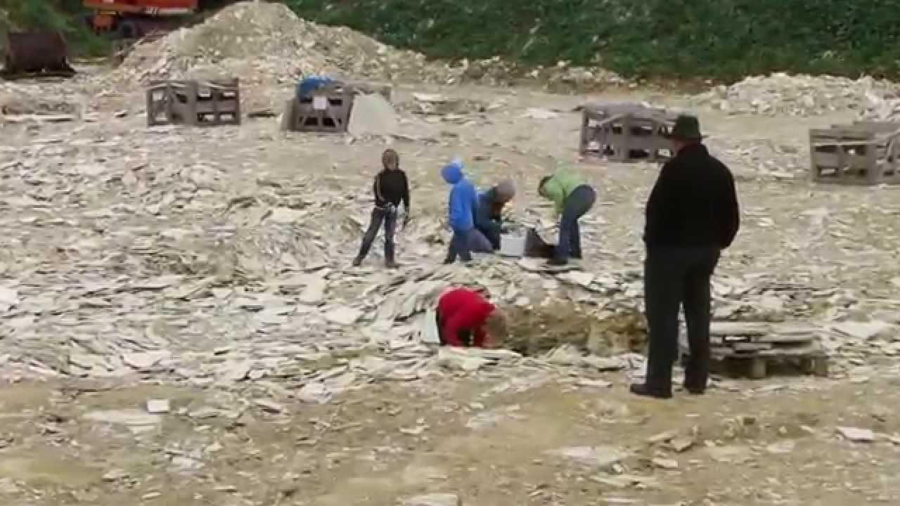 Fossilien Suchen