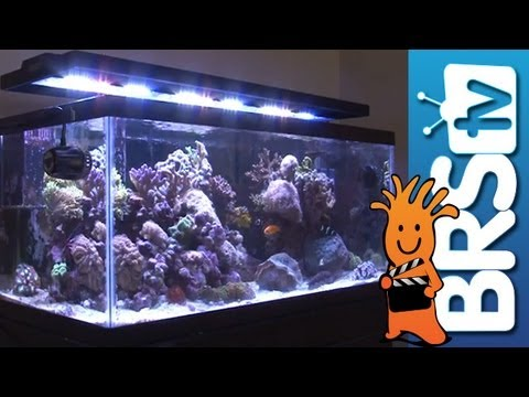 Led Lighting For Aquariums Ep 3 Aquarium Lighting Youtube