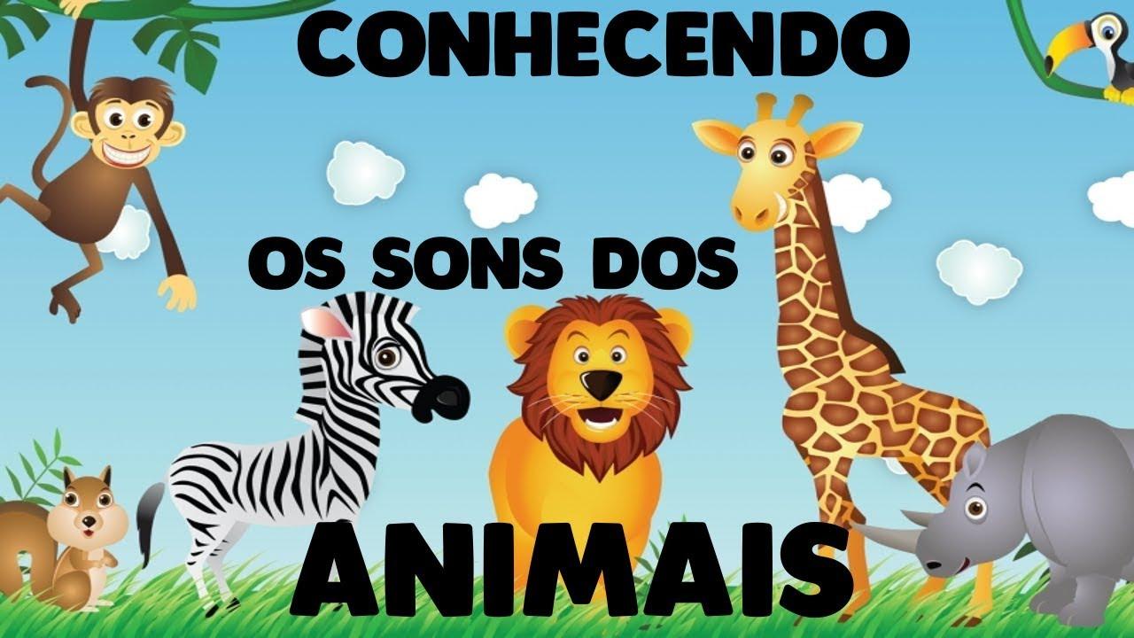 Sons Dos Animais Educação Infantil Youtube