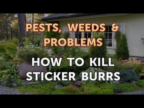 How to Kill Sticker Burrs