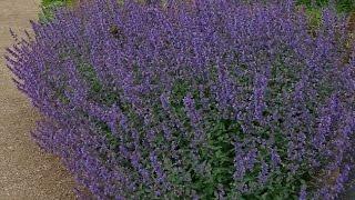 Hobi Bahçecilik - Şifalı Bitki Yetiştiriciliği 1.Bölüm