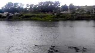 Отдых на природе(Ездил с друзьями за город, не доезжая до места, увидели озеро с утками, не смогу удержаться что б не покормит..., 2014-07-19T14:22:42.000Z)