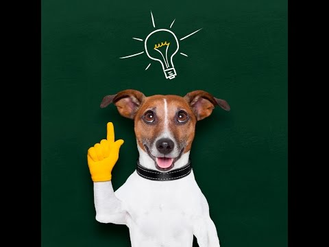 A test to find out how smart your dog is!