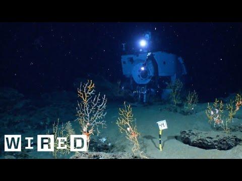 The Alvin Submarine Part 2: Incredible Views On-Board the Deep-Sea Vessel​