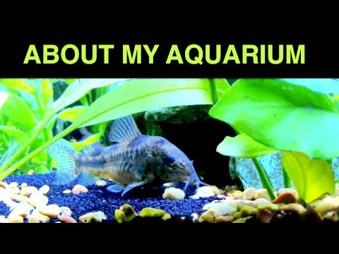 ASMR - Aquarium  Sleep Aid