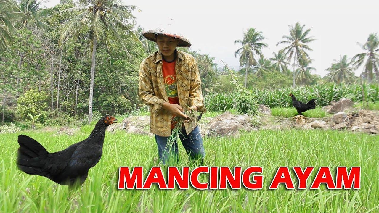 Pendek Bahasa Lampung MANCING AYAM Eps 16