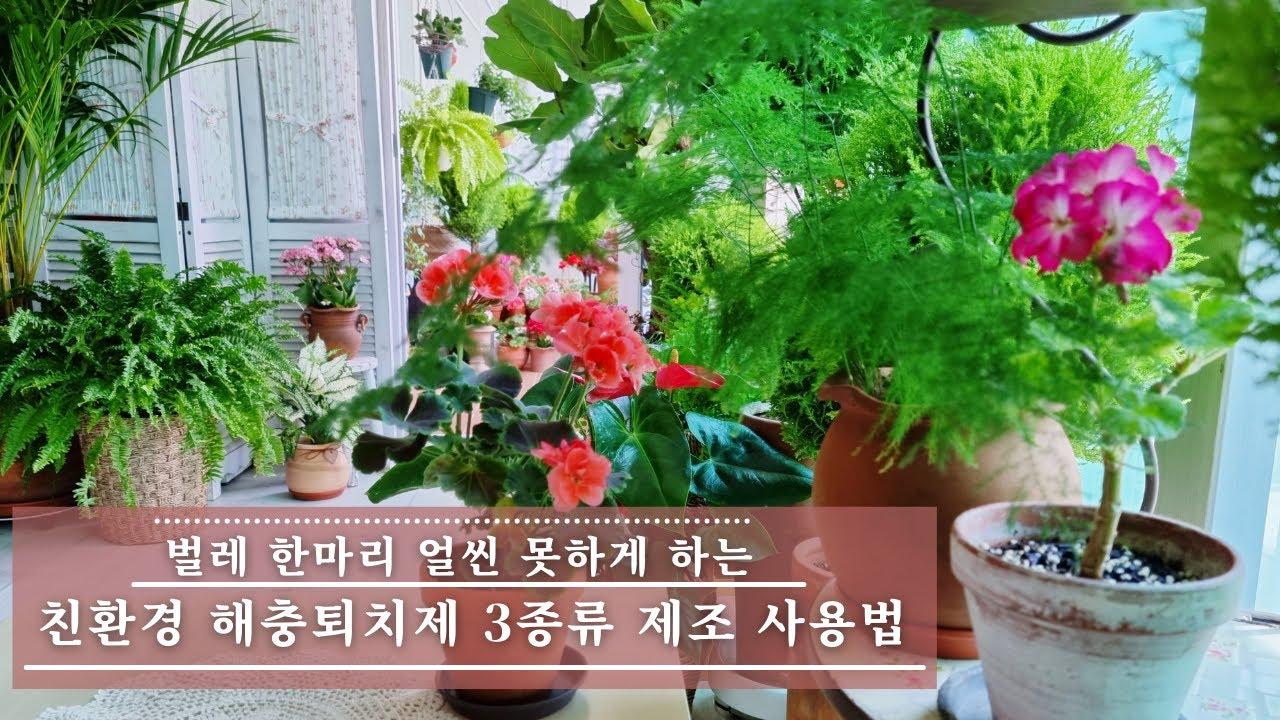 실내에서 식물을 키우려면 반드시 알아야하는 해충 예방법 / 깔끔한 베란다 정원을 유지하는 친환경 해충 퇴치제 3종세트 제조법과 사용법 / 값싸고 손쉽게 만들 수 있는 병충해 퇴치제
