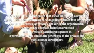 Florida Dachshund Rescue Video