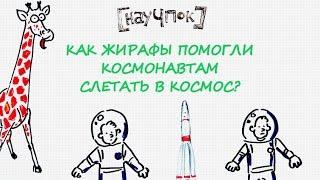 Как жирафы помогли космонавтам слетать в космос? — Научпок