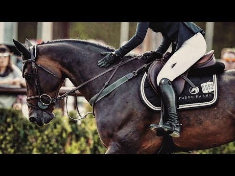 Hall Of Fame || Equine Edit
