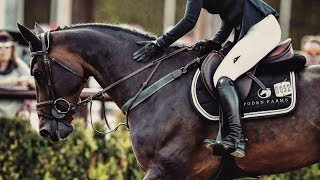 Hall Of Fame    Equine Edit