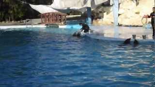 Дельфинарий, шоу Дельфинов в Шарм Эль Шейхе