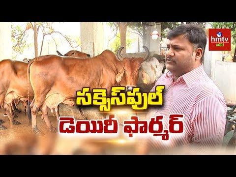 Dairy Farmer Manoj Reddy Success Story | Dairy Farming | hmtv Agri