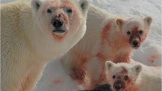 Ice Killers - Arctic Cold Predators (Nature Wildlife Documentary) thumbnail
